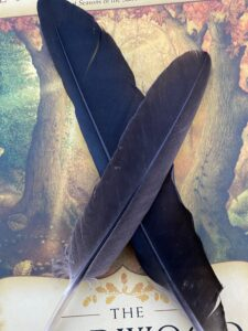 Two corvid feathers on a book